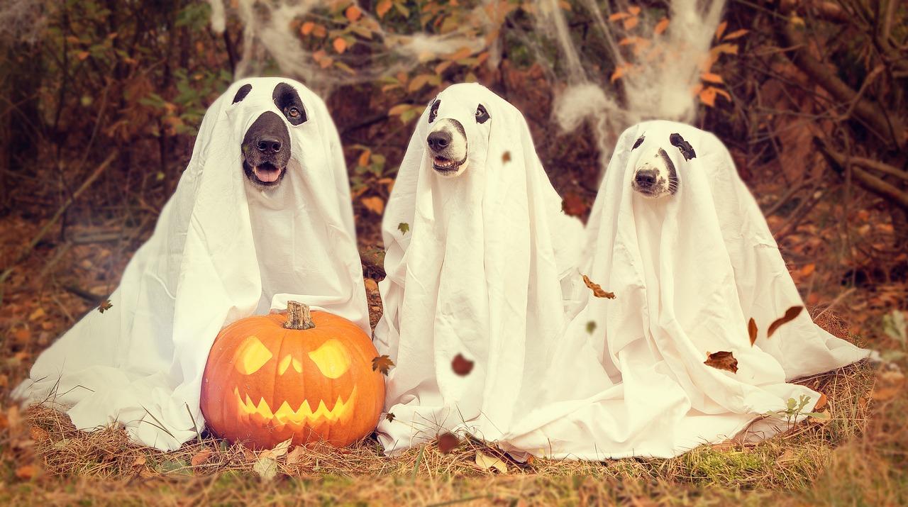 Dog Halloween Event