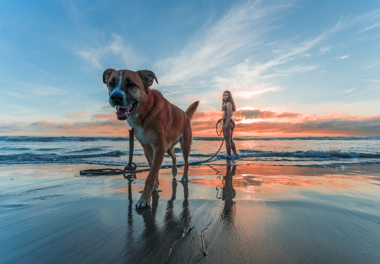 bringing your dog to the beach